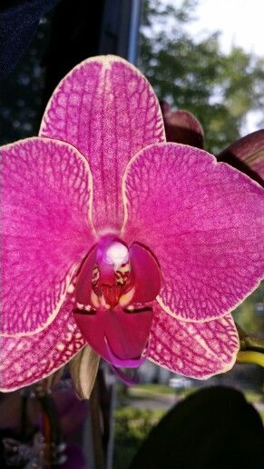 Close up of Pinkish Purple Orchid flower