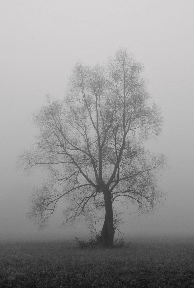 Lonely. Black and white photography landscape. Tree in the mist.