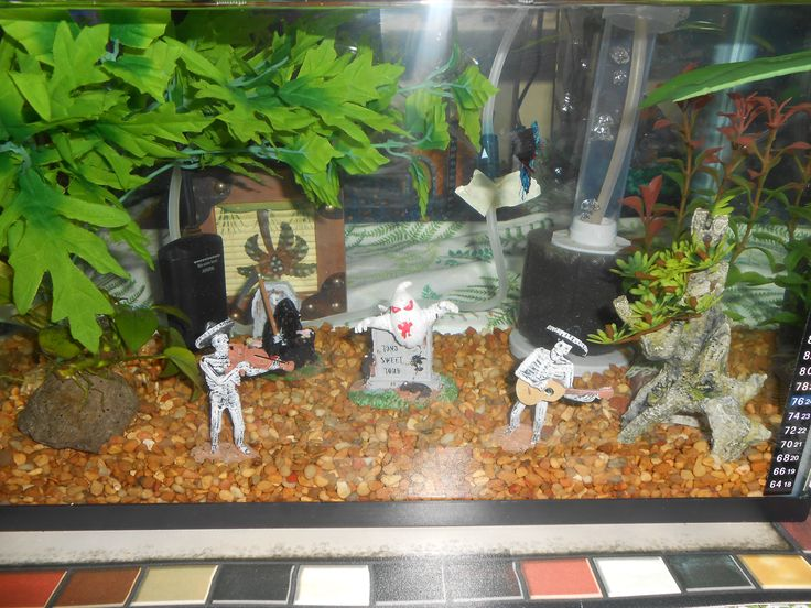 Decorate your fish tank for halloween halloween ideas for How to decorate fish tank