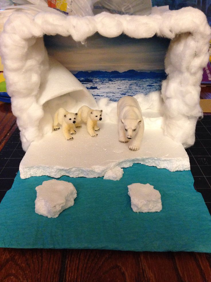 Reed's Polar Bear Diorama!