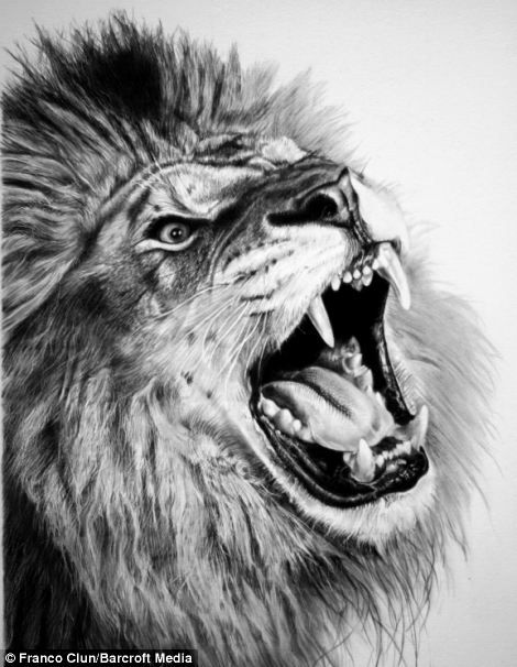 Francos animal drawing of a roaring lion