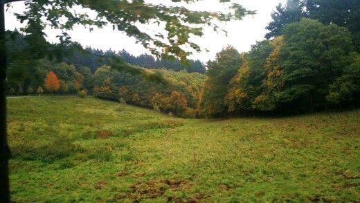 Bosque alemán