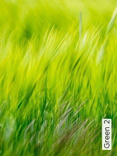 39 Besten Grüne Tapeten Bilder Auf Pinterest | Grüne Tapete