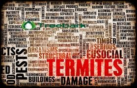 Termite Treatment Options for the Various Species of Termites. For more information https://treebarktermiteandpestcontrol.com/termite-treatment-options/
