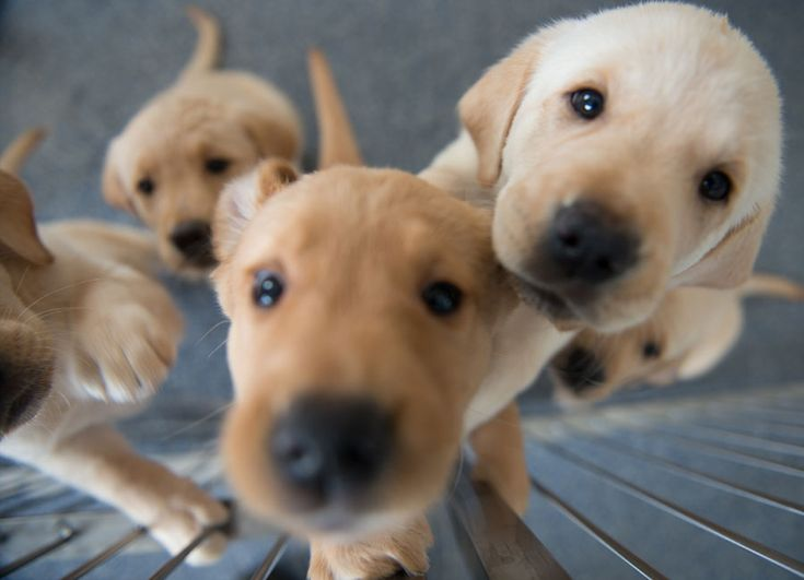 The Best Foster Puppies Ideas On Pinterest Pet Door Wood - Dog escapes from kennel to comfort abandoned crying puppies