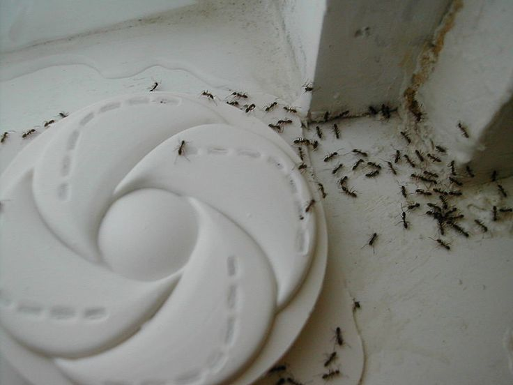 DIY Pest Control Tips For Home And Business Owners