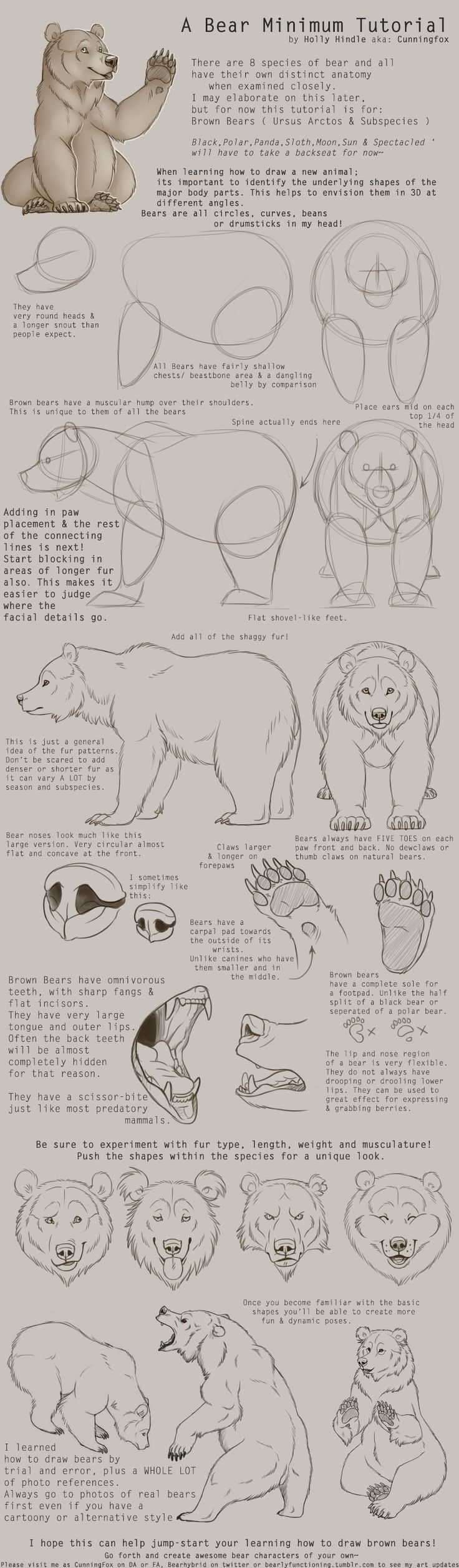 Beautiful Animal Anatomy And Physiology Inspiration - Anatomy and ...