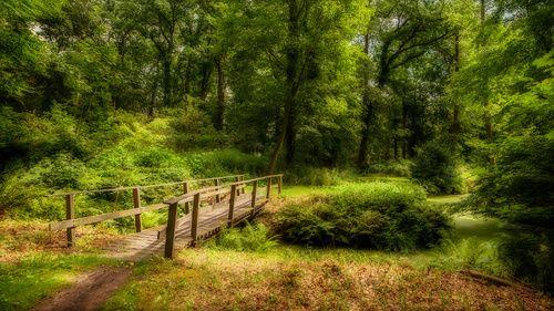 Brug in het bos