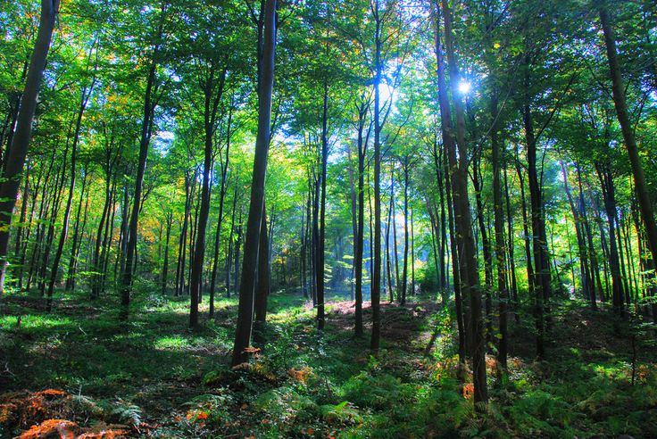 The clearest way into the universe is through a forest wilderness. #istria #croatia #amazing #beauty #photo