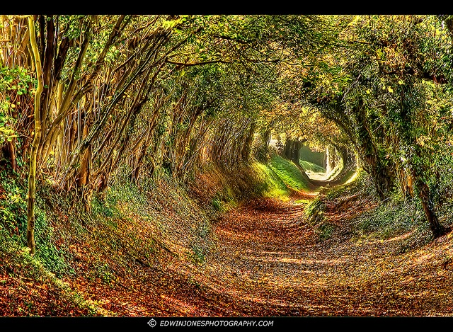 This footpath goes from the village of Halnaker near Chichester, UK up to Halnaker Mill on the Sussex Downs.