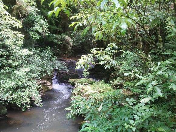Ruakuri Caves & Bush Scenic Reserve, New Zealand.