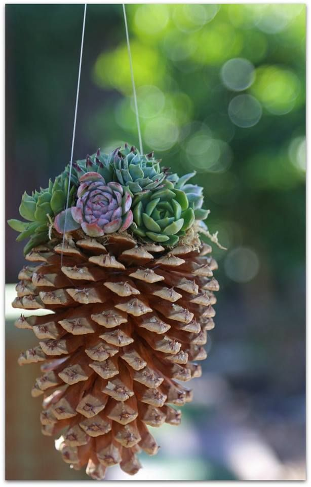 ❀*゚゚ I really like this pine cone planter for succulents ゚゚*❀