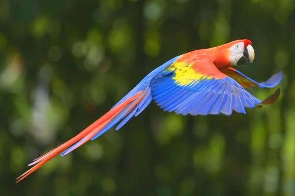 Der Nationalpark Corcovado im Südwesten von Costa Rica begeistert durch seine Artenvielfalt. #natur #costarica
