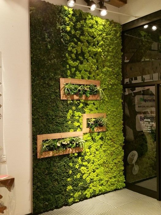 inspiration moss wall living art - Garden Therapy