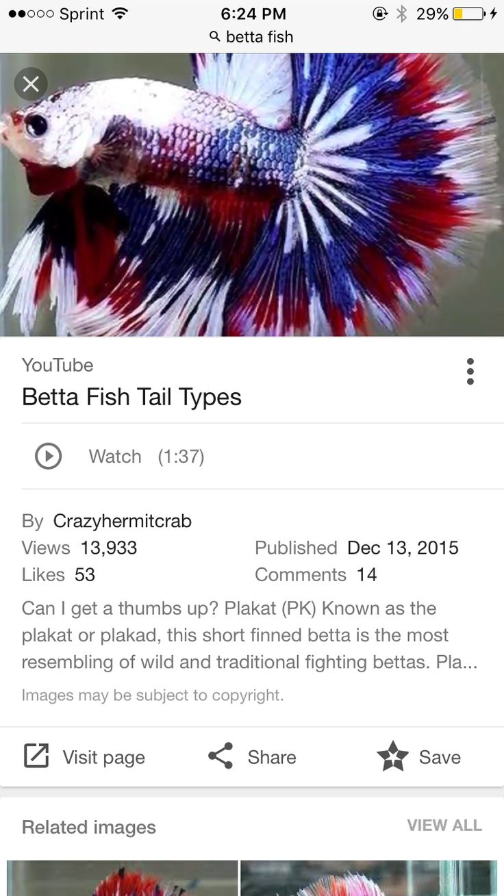 15 best betta fixation images on pinterest betta fish care find this pin and more on hobby aquatics by kalexander98 nvjuhfo Choice Image