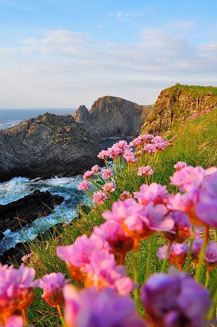 Sea Cliffs | Cionn Mhálanna, Ireland: Pink Flower, Cionn Mhálanna, Sea Cliff, Coastal Beautiful, Beautiful Places, Doneg Ireland, Malinhead, Malin Head, Landscape