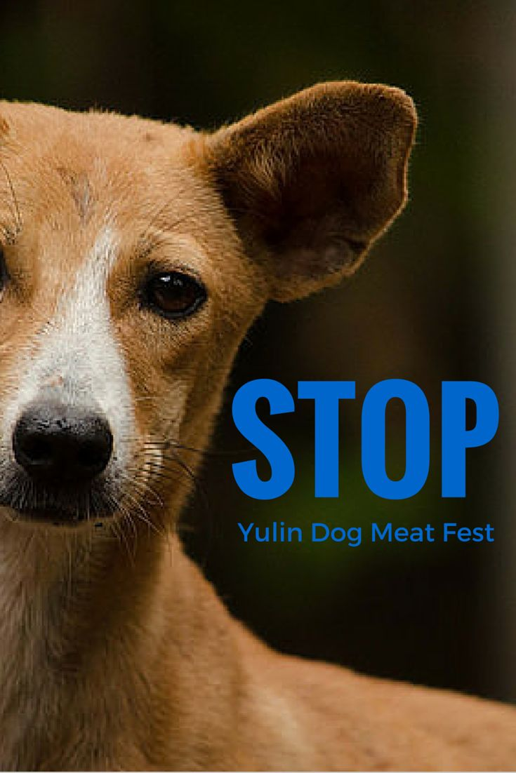 Twitter users are tweeting photos of the Yulin Dog Meat Festival with the hashtag #StopYulinFest in the hopes that early action will cancel this year's event. Similar efforts last year didn't stop it, but did result in driving up the price of dog meat to a record high. (credit: flickr/uditha wickramanayaka)