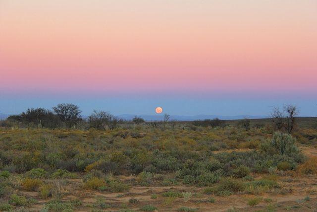 Sunrise safari. © John McIlvaine