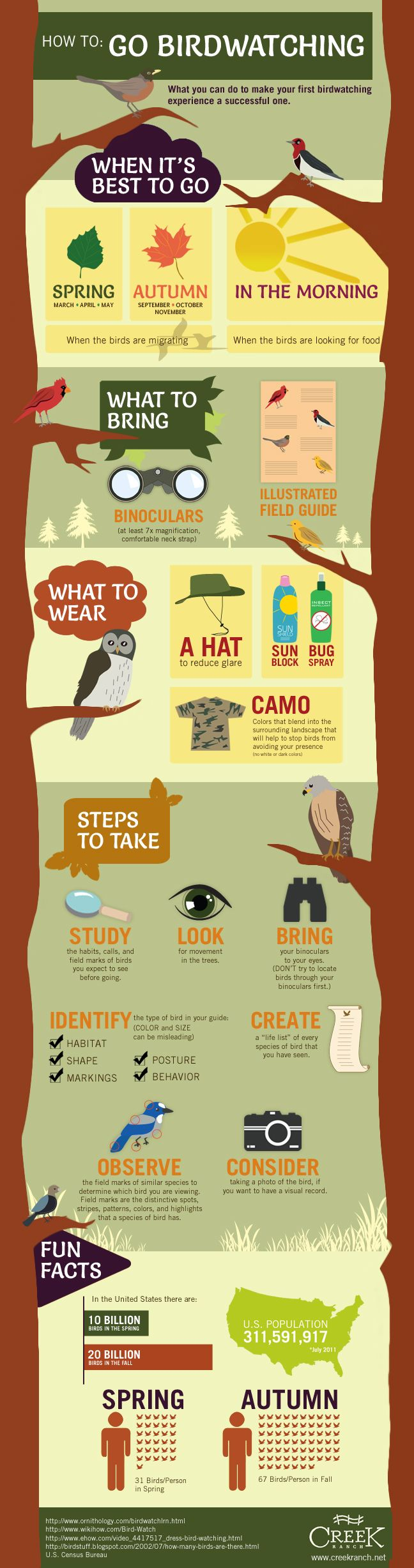 A complete graphic guide on how to go birdwatching. Most of it is basic advice, but is still helpful.