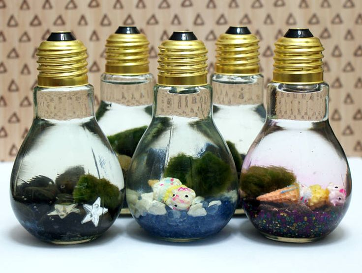 These easy Marimo moss ball DIY light bulb aquariums make a great home for tiny …
