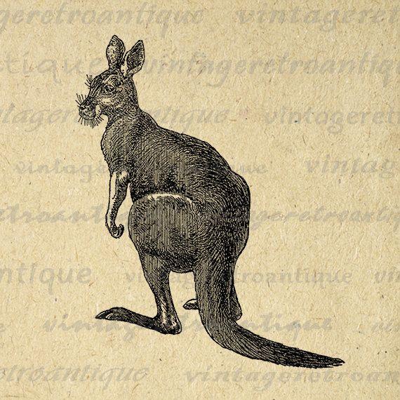 Kangaroo Digital Image Graphic Download Kangaroo Illustration Printable Vintage Clip Art Jpg Png Eps 18x18 HQ 300dpi No.2644 @ vintageretroantique.etsy.com