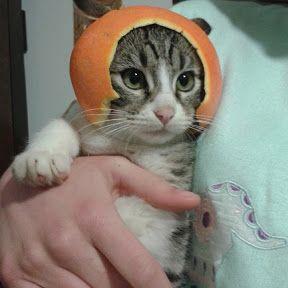 Cat from outer space by desann12.deviantart.com on @DeviantArt