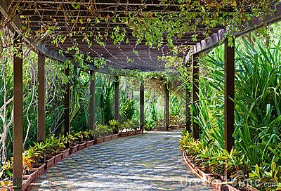 Vine Covered Walkway Covered Walkway Filled With Vines