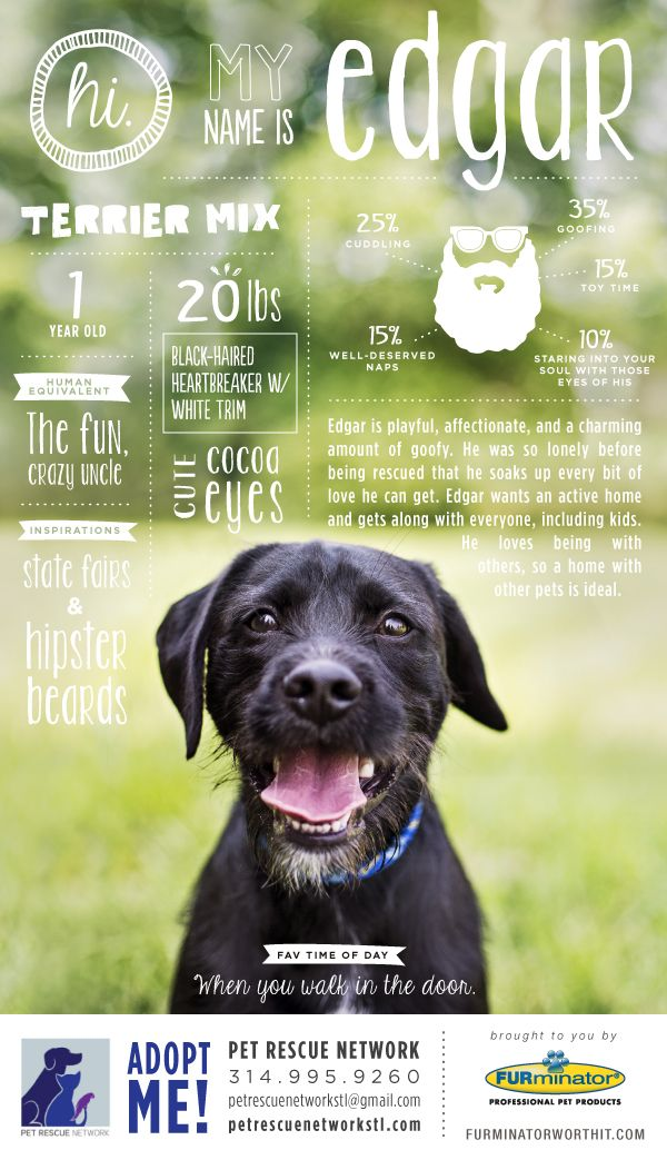 Hi. My name is Edgar. I'm looking for my forever home. #pet #adoption #poster #dog #design #infographics