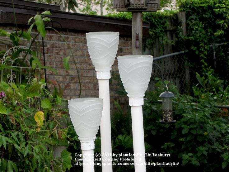 Pvc pipe garden garden art forum light shades in the for Pvc pipe projects ideas