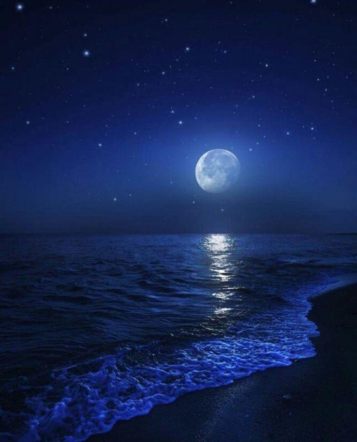 Герберы, картинки с изображением ночи