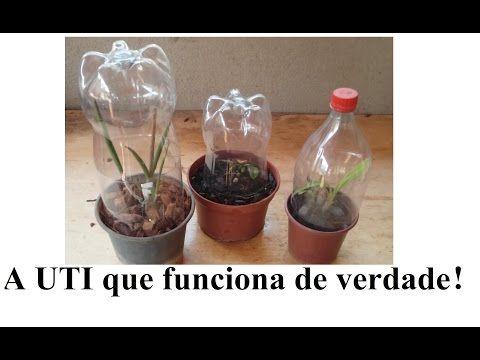 Como Salvar Orquídeas sem raiz nenhuma!!! - YouTube