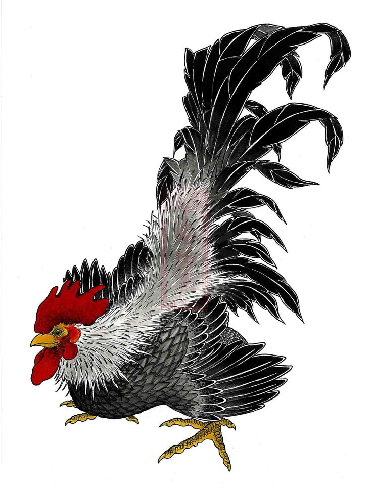 The product Rooster is sold by ARIUKEN ART in our Tictail store. Tictail lets you create a beautiful online store for free - tictail.com