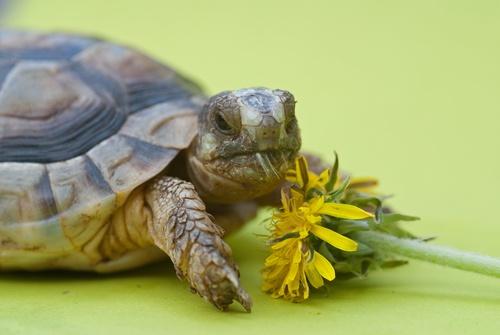www.petclic.es la mayor tienda online de productos para #mascotas. La mayor biblioteca de contenido y consejos sobre mascotas. 1.000 consejos. 50.000 imagenes. Foto de #animales #tortuga #salud