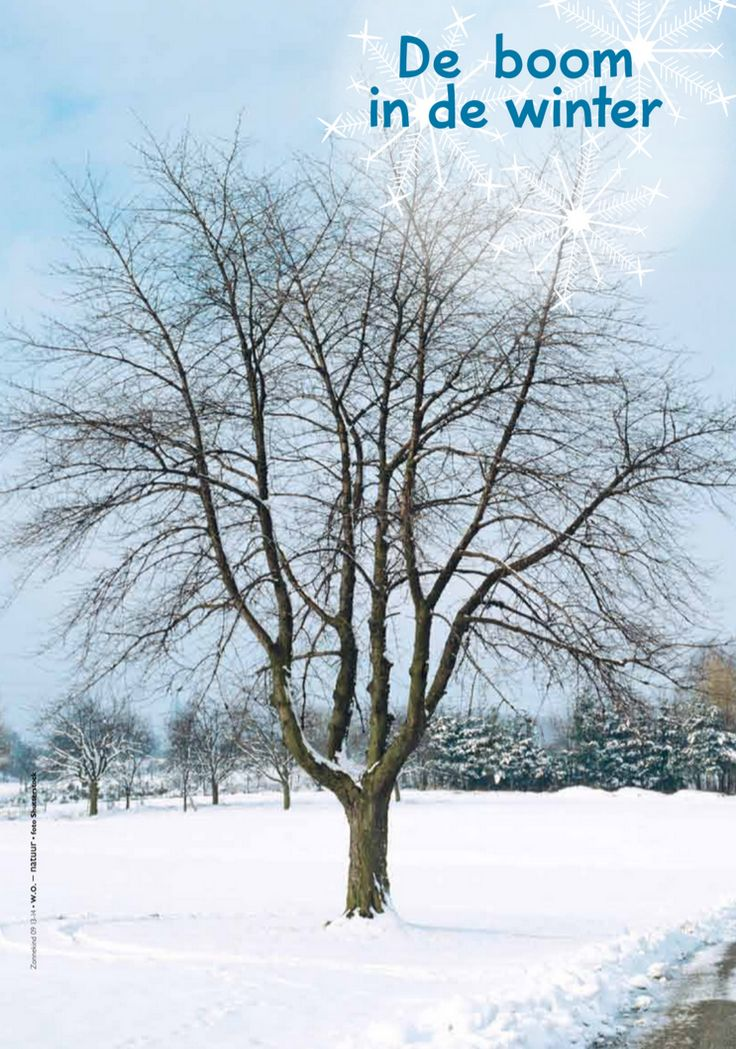 de boom in de winter @keireeen