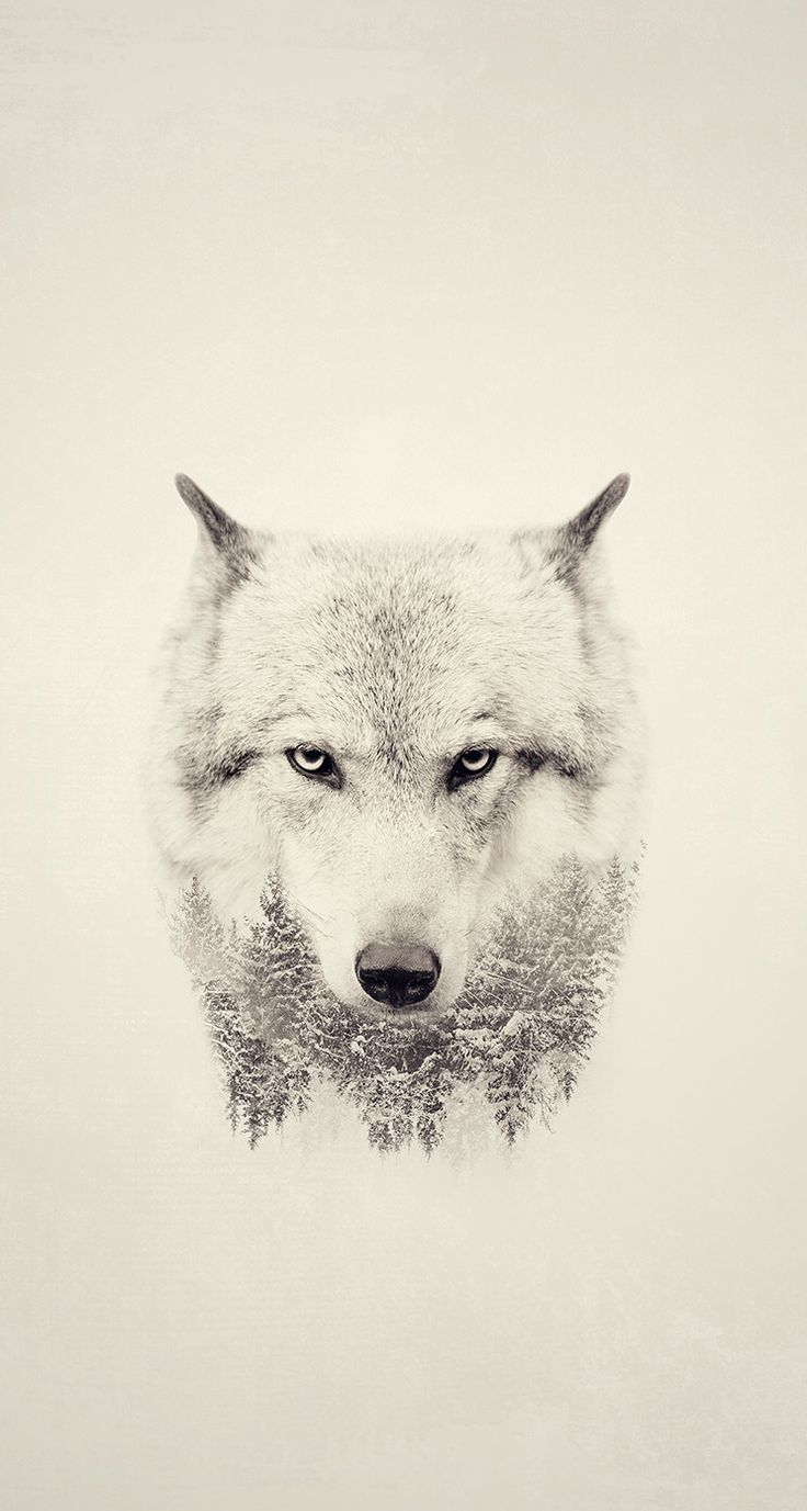 I love the intensity of this wolf's gaze and the forest in its mane.