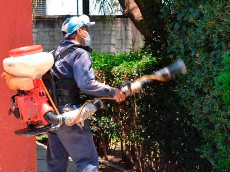 Por qué se da el de Dengue en Guanajuato - Periodico Correo