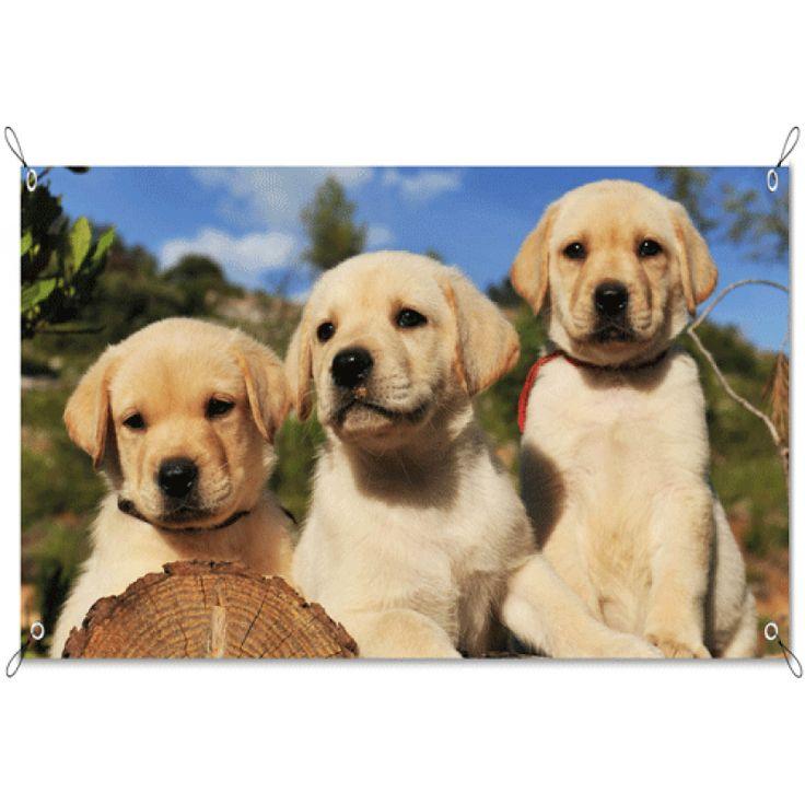 Tuinposter Labradors   Maak je tuin nog mooier met een weerbestendige tuinposter van YouPri. Bewezen kleurbehoud! #tuinposter #tuindoek #tuin #poster #weerbestendig #kleurbehoud #frontlit #goedkoop #voordelig #spanners #ogen #hond #honden #puppy #puppies #hondjes #lief #dieren #dier #huisdier