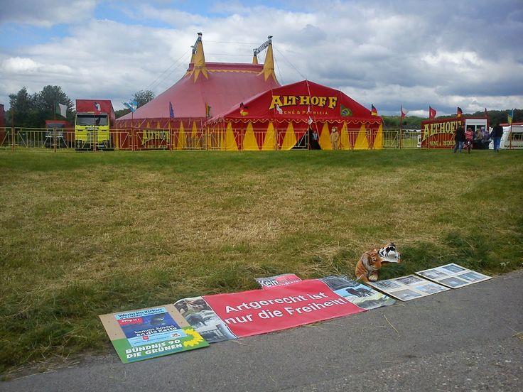 Artgerecht ist nur die Freiheit: Mahnwache gegen Wildtiere im Zirkus #gl1 -  Soeben kehre ich zurück von der Mahnwache vor dem in Nußbaum gastierenden Zirkus Althoff. Während Tigergebrüll aus dem Käfig drang, verteilten Aktivisten von Peta (und Peta2, der Jugendorganisation von Peta), Vier Pfoten sowie Bündnis 90/Die Grünen Informationsmaterial gegen die Käfighaltung von Wildtieren.