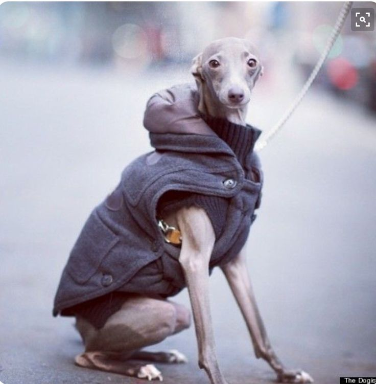 Milk & Pepper Coat. Photography - The Dogist