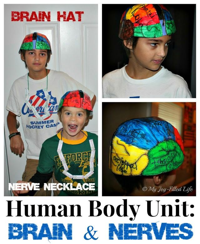 Human Body Unit: Brain & Nerve activities and resources @Sarah Chintomby Avila {My Joy-Filled Life}
