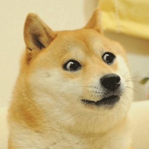 66c3ccd904da4955a3226a65e3bb63f6 doge meme reaction pictures 66 best doge images on pinterest doge meme, funny images and