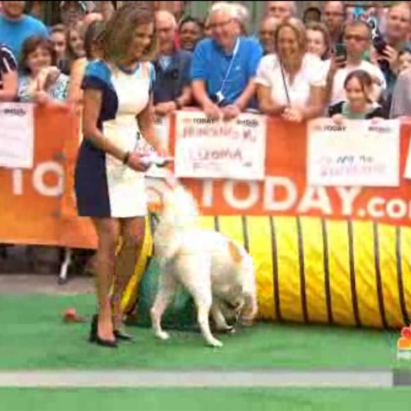 TODAY Show Anchors and Their Dogs Try Agility fun with their own dogs!
