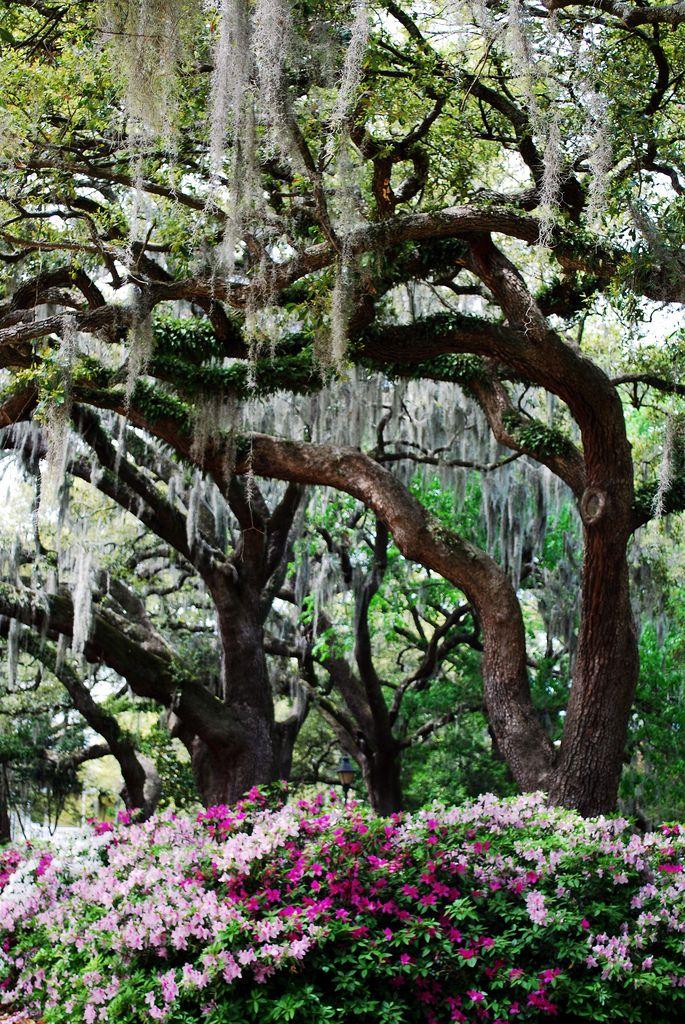 Savannah Georgia HD Wallpapers Backgrounds