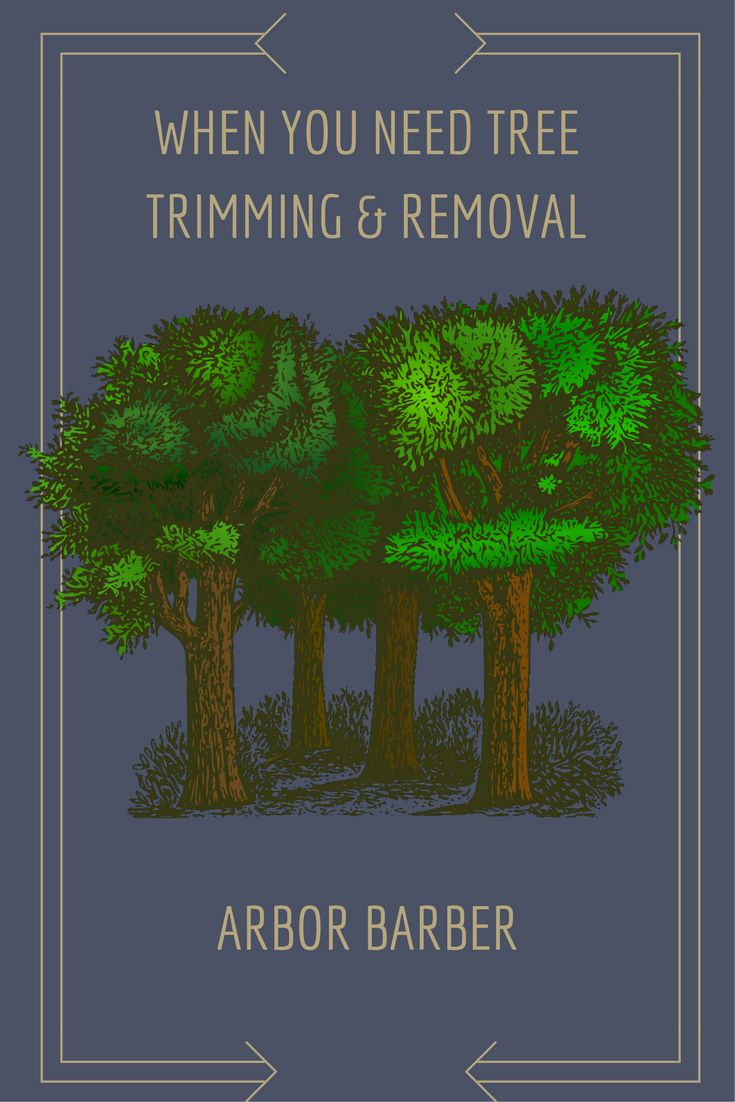 Tree borers amp bark beetles arborx tree health care - Call Brian Tinklepaugh With Arbor Barber At 913 204 0391 When You Need Tree Trimming Or Removal Contact Tom Mcchesney With Keller Williams Key Partners At