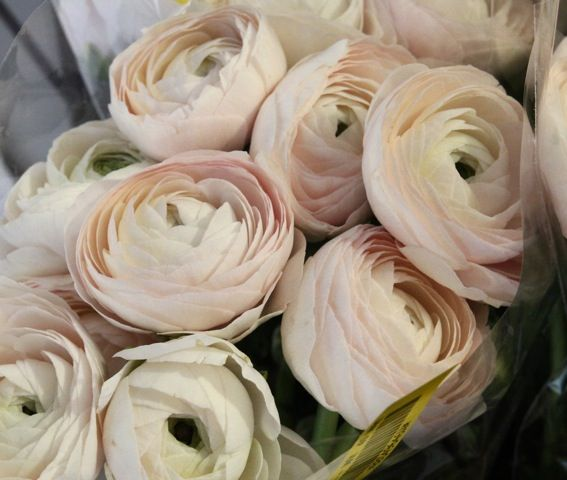 Timeless ranunculus bouquet. Perfect shade between white and blush