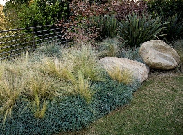 Nisella with blue fescue, eucomis and boulders
