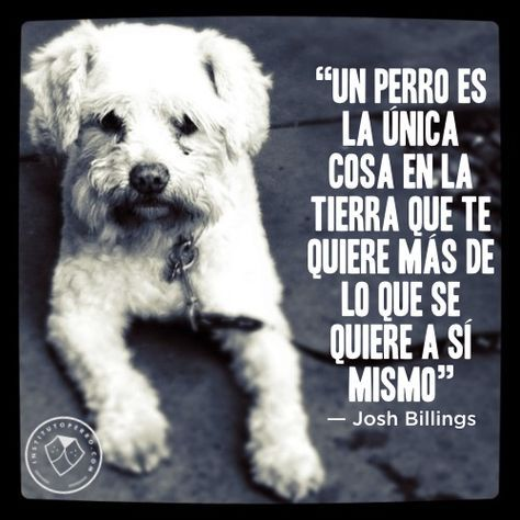 frases perros 6