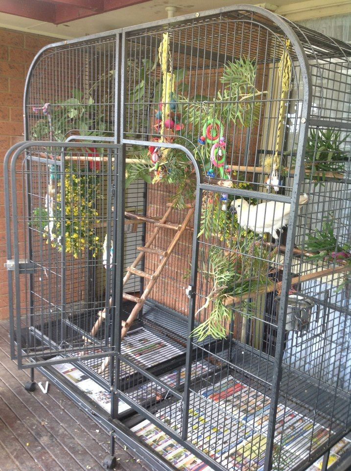 This is almost the exact cage I have my Green Wing Macaws in!