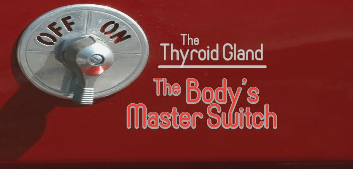 The Thyroid Gland Is The Body's Master Switch
