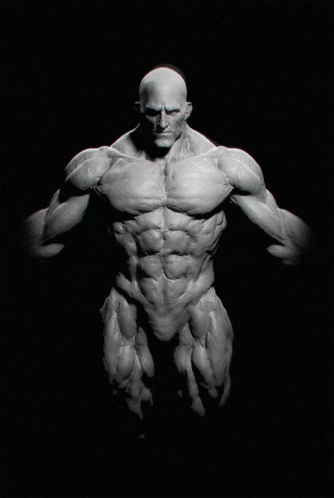 147 best REFERENCE | ANATOMY | MALE images on Pinterest | Human ...